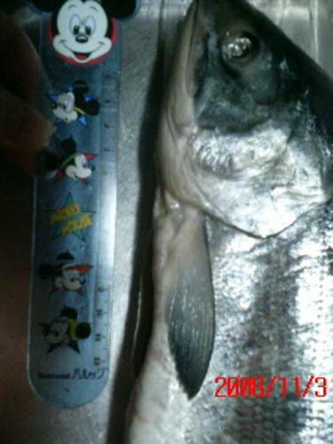 ミッキーと鮭(byシュウ)
