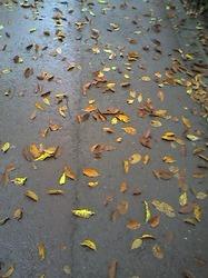 雨に濡れた落ち葉(byきなこ)